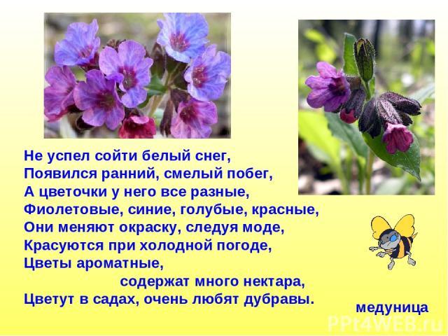 Не успел сойти белый снег, Появился ранний, смелый побег, А цветочки у него все разные, Фиолетовые, синие, голубые, красные, Они меняют окраску, следуя моде, Красуются при холодной погоде, Цветы ароматные, содержат много нектара, Цветут в садах, оче…