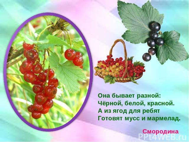 Она бывает разной: Чёрной, белой, красной. А из ягод для ребят Готовят мусс и мармелад. Смородина