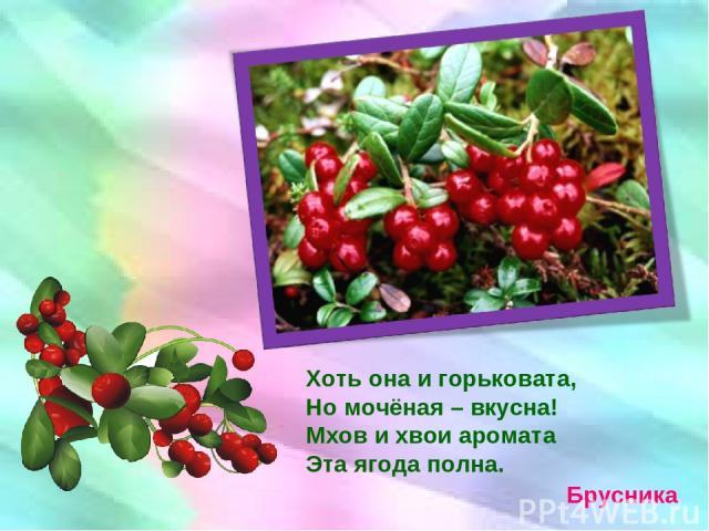 Брусника Хоть она и горьковата, Но мочёная – вкусна! Мхов и хвои аромата Эта ягода полна.
