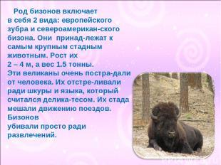 Род бизонов включает в себя 2 вида: европейского зубра и североамерикан-ского би