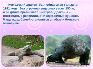 Комодский дракон был обнаружен только в 1911 году. Эта огромная ящерица весит 15