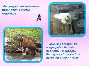 Медведи – это мохнатые тяжеловесы среди хищников. Самый большой из медведей – бе
