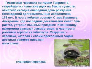 Гигантская черепаха по имени Генриетта – старейшая из ныне живущих на Земле суще