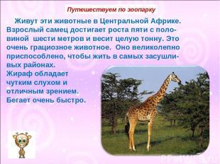 Живут эти животные в Центральной Африке. Взрослый самец достигает роста пяти с п