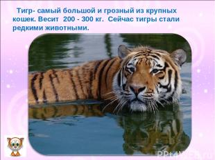 Тигр- самый большой и грозный из крупных кошек. Весит 200 - 300 кг. Сейчас тигры