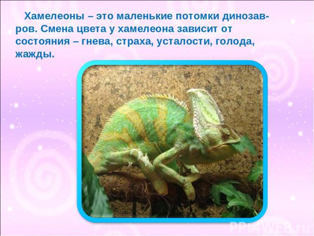 Хамелеоны – это маленькие потомки динозав- ров. Смена цвета у хамелеона зависит от состояния – гнева, страха, усталости, голода, жажды.