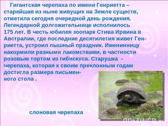 Гигантская черепаха по имени Генриетта – старейшая из ныне живущих на Земле существ, отметила сегодня очередной день рождения. Легендарной долгожительнице исполнилось 175 лет. В честь юбилея зоопарк Стива Ирвина в Австралии, где последние десятилети…
