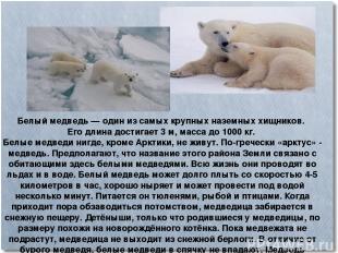 Белый медведь— один из самых крупных наземных хищников. Его длина достигает 3м