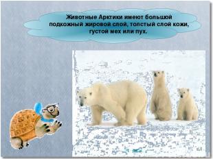 Животные Арктики имеют большой подкожный жировой слой, толстый слой кожи, густой