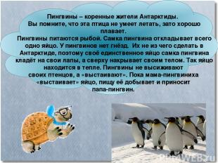 Пингвины – коренные жители Антарктиды. Вы помните, что эта птица не умеет летать