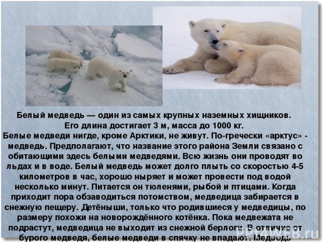Белый медведь— один из самых крупных наземных хищников. Его длина достигает 3м, масса до 1000 кг. Белые медведи нигде, кроме Арктики, не живут. По-гречески «арктус» - медведь. Предполагают, что название этого района Земли связано с обитающими здес…