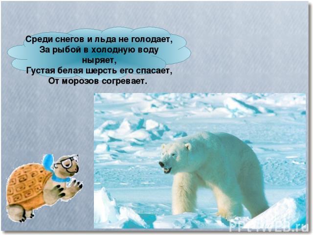 Среди снегов и льда не голодает, За рыбой в холодную воду ныряет, Густая белая шерсть его спасает, От морозов согревает.