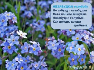 НЕЗАБУДКИ( голубой) Не забудут незабудки Лета нашего минутки. Незабудки голубые,