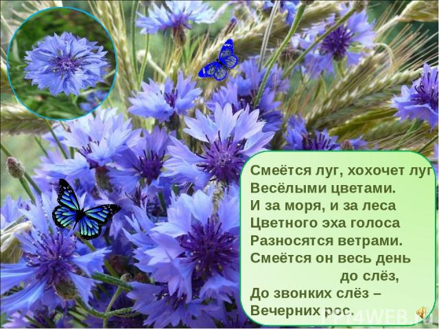 Смеётся луг, хохочет луг Весёлыми цветами. И за моря, и за леса Цветного эха голоса Разносятся ветрами. Смеётся он весь день до слёз, До звонких слёз – Вечерних рос.
