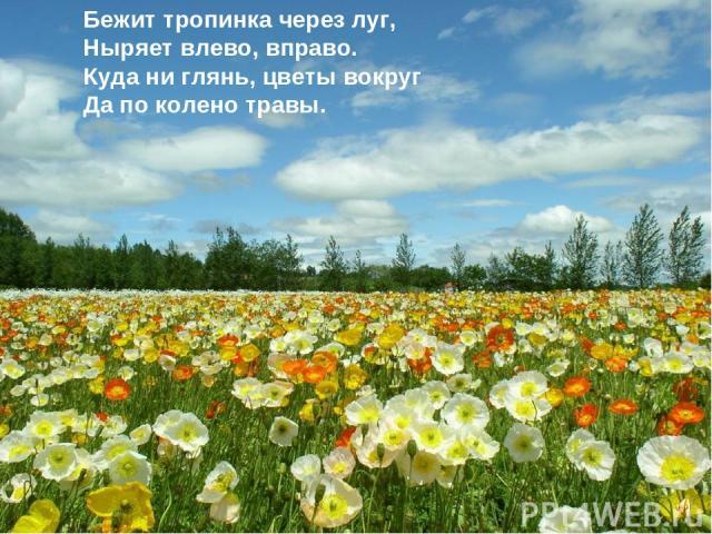Бежит тропинка через луг, Ныряет влево, вправо. Куда ни глянь, цветы вокруг Да по колено травы.