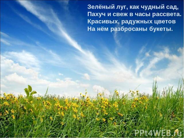 Зелёный луг, как чудный сад, Пахуч и свеж в часы рассвета. Красивых, радужных цветов На нём разбросаны букеты.