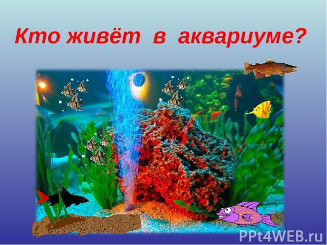 Кто живёт в аквариуме?