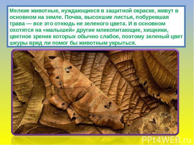 Мелкие животные, нуждающиеся в защитной окраске, живут в основном на земле. Почва, высохшие листья, побуревшая трава — все это отнюдь не зеленого цвета. И в основном охотятся на «малышей» другие млекопитающие, хищники, цветное зрение которых обычно …