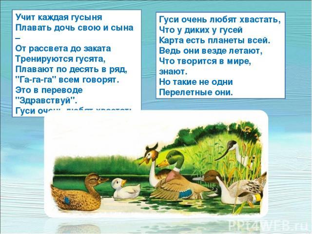 Учит каждая гусыня Плавать дочь свою и сына – От рассвета до заката Тренируются гусята, Плавают по десять в ряд,
