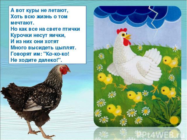 А вот куры не летают, Хоть всю жизнь о том мечтают. Но как все на свете птички Курочки несут яички, И из них они хотят Много высидеть цыплят. Говорят им: