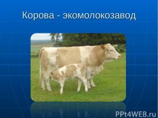 Корова - экомолокозавод