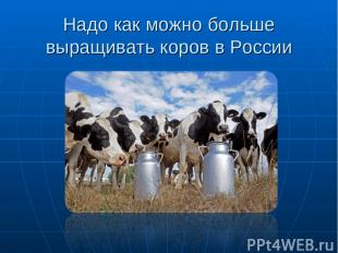 Надо как можно больше выращивать коров в России