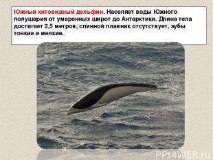 Южный китовидный дельфин. Населяет воды Южного полушария от умеренных широт до А