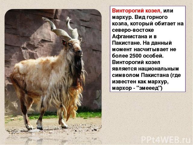 Винторогий козел, или мархур. Вид горного козла, который обитает на северо-востоке Афганистана и в Пакистане. На данный момент насчитывает не более 2500 особей. Винторогий козел является национальным символом Пакистана (где известен как мархур, марх…