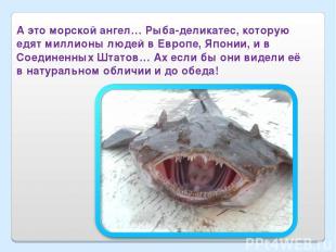 А это морской ангел… Рыба-деликатес, которую едят миллионы людей в Европе, Япони