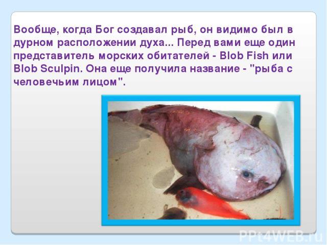 Вообще, когда Бог создавал рыб, он видимо был в дурном расположении духа... Перед вами еще один представитель морских обитателей - Blob Fish или Blob Sculpin. Она еще получила название -