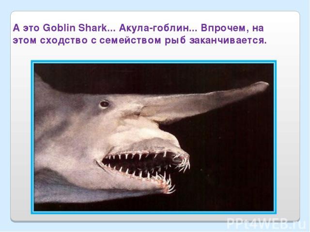 А это Goblin Shark... Акула-гоблин... Впрочем, на этом сходство с семейством рыб заканчивается.