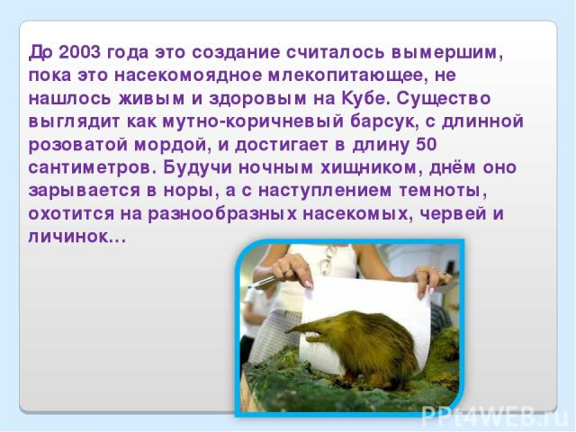 До 2003 года это создание считалось вымершим, пока это насекомоядное млекопитающее, не нашлось живым и здоровым на Кубе. Существо выглядит как мутно-коричневый барсук, с длинной розоватой мордой, и достигает в длину 50 сантиметров. Будучи ночным хищ…