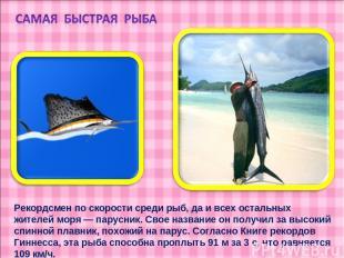 Рекордсмен по скорости среди рыб, да и всех остальных жителей моря — парусник. С