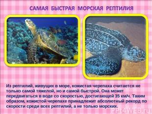 Из рептилий, живущих в море, кожистая черепаха считается не только самой тяжелой