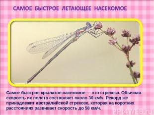 Самое быстрое крылатое насекомое — это стрекоза. Обычная скорость их полета сост