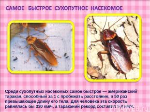 Среди сухопутных насекомых самое быстрое — американский таракан, способный за 1