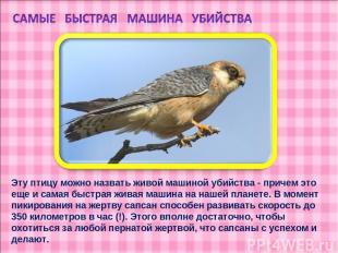 Эту птицу можно назвать живой машиной убийства - причем это еще и самая быстрая