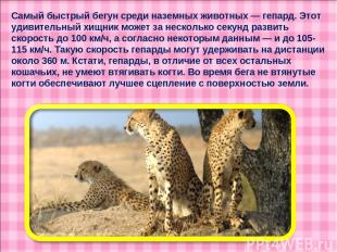 Самый быстрый бегун среди наземных животных — гепард. Этот удивительный хищник м