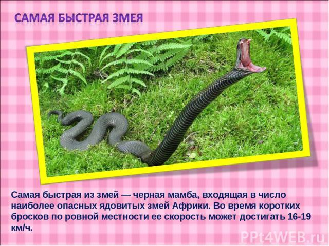 Самая быстрая из змей — черная мамба, входящая в число наиболее опасных ядовитых змей Африки. Во время коротких бросков по ровной местности ее скорость может достигать 16-19 км/ч.