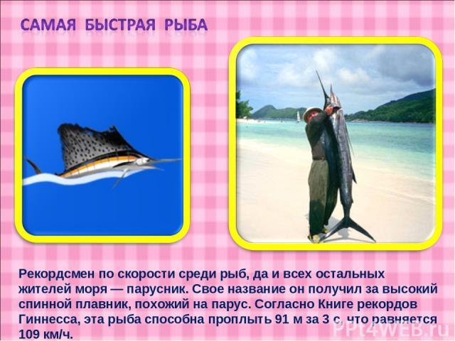 Рекордсмен по скорости среди рыб, да и всех остальных жителей моря — парусник. Свое название он получил за высокий спинной плавник, похожий на парус. Согласно Книге рекордов Гиннесса, эта рыба способна проплыть 91 м за 3 с, что равняется 109 км/ч.