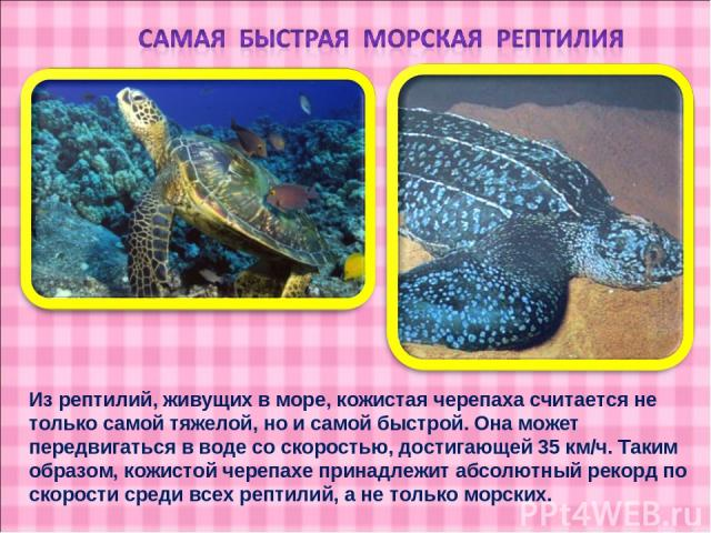 Из рептилий, живущих в море, кожистая черепаха считается не только самой тяжелой, но и самой быстрой. Она может передвигаться в воде со скоростью, достигающей 35 км/ч. Таким образом, кожистой черепахе принадлежит абсолютный рекорд по скорости среди …