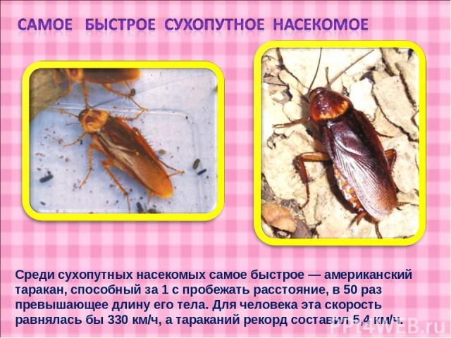 Среди сухопутных насекомых самое быстрое — американский таракан, способный за 1 с пробежать расстояние, в 50 раз превышающее длину его тела. Для человека эта скорость равнялась бы 330 км/ч, а тараканий рекорд составил 5,4 км/ч.