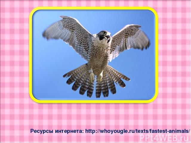 Ресурсы интернета: http://whoyougle.ru/texts/fastest-animals/
