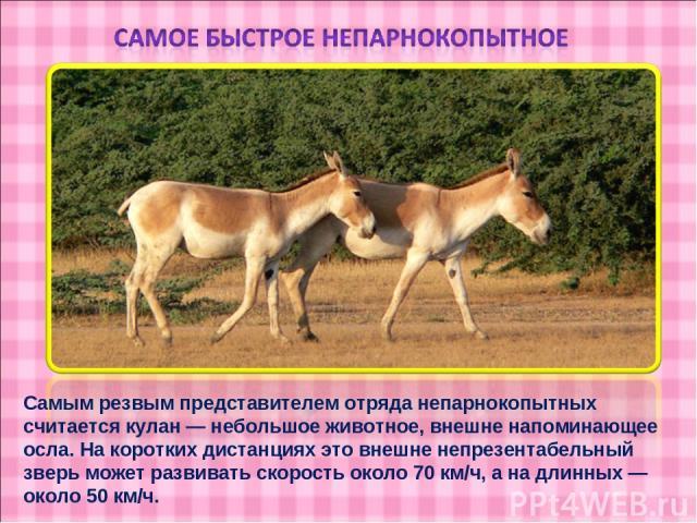 Самым резвым представителем отряда непарнокопытных считается кулан — небольшое животное, внешне напоминающее осла. На коротких дистанциях это внешне непрезентабельный зверь может развивать скорость около 70 км/ч, а на длинных — около 50 км/ч.