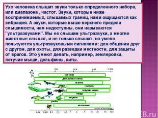 Ухо человека слышит звуки только определенного набора, или диапазона , частот. З