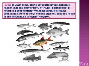 Рыбы слышат лишь около четверти звуков, которые издает человек, пятую часть птич