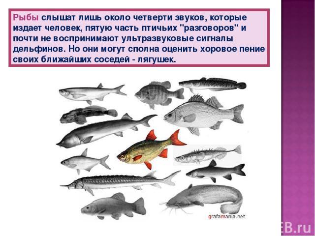 Рыбы слышат лишь около четверти звуков, которые издает человек, пятую часть птичьих