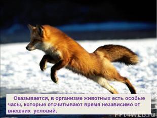 Оказывается, в организме животных есть особые часы, которые отсчитывают время не