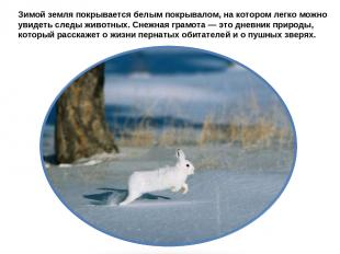 Зимой земля покрывается белым покрывалом, на котором легко можно увидеть следы ж