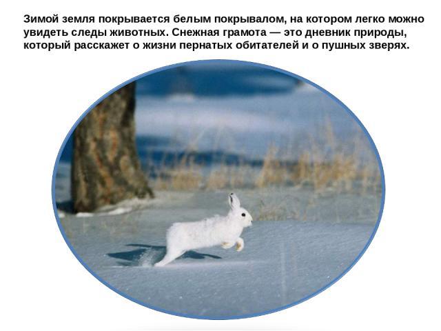 Зимой земля покрывается белым покрывалом, на котором легко можно увидеть следы животных. Снежная грамота — это дневник природы, который расскажет о жизни пернатых обитателей и о пушных зверях.